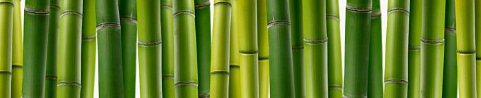Bamboo - Growing Guide